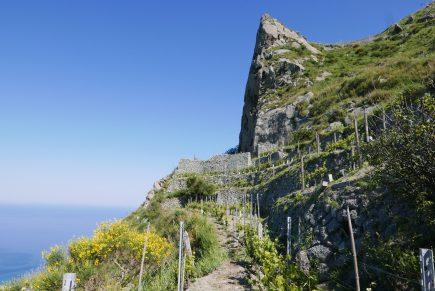 Al via il concorso di fotografia sul paesaggio rurale storico e terrazzato dell'isola d'Ischia